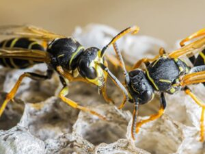 Fort Lauderdale Stinging Insects Control